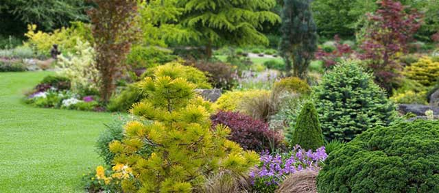 A-Passion-for-Conifers_01_.jpg