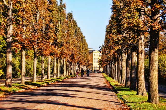 tree-lined-avenue.jpg